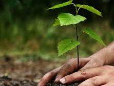 'हरियाली अभियान' शुरु